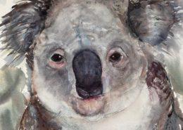 Living with Koalas artist Lorraine BROWN