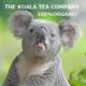 living with koalas and Koala tea