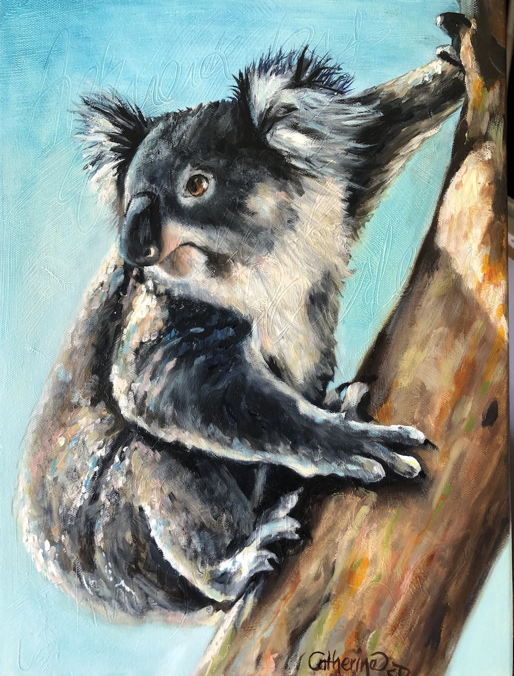 Living with Koalas artist Catherine Clark Dowden