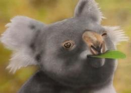 Living with Koalas - Jason McBride