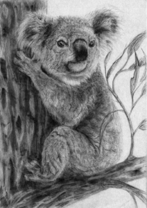 living with koalas artist - Kayla Outhred