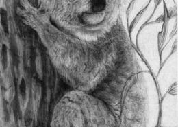 living with koalas artist - Kayla Outhred