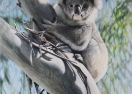 living with koalas artist William Ritchie