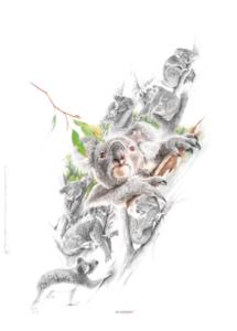 Living with koalas artist Chris McClelland