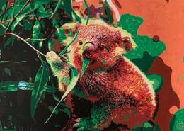 Living with Koalas artist Alejandra SIEDER