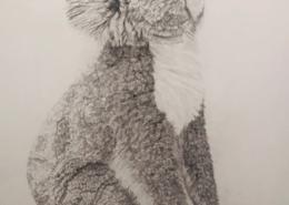 Living with Koalas artist - Alessia Faccinia SA