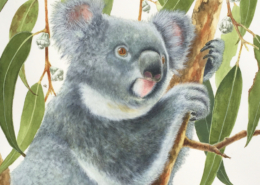 Living with Koalas - artist David REYNOLDS