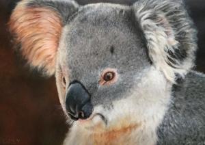 living with koalas artist - Christell Grey