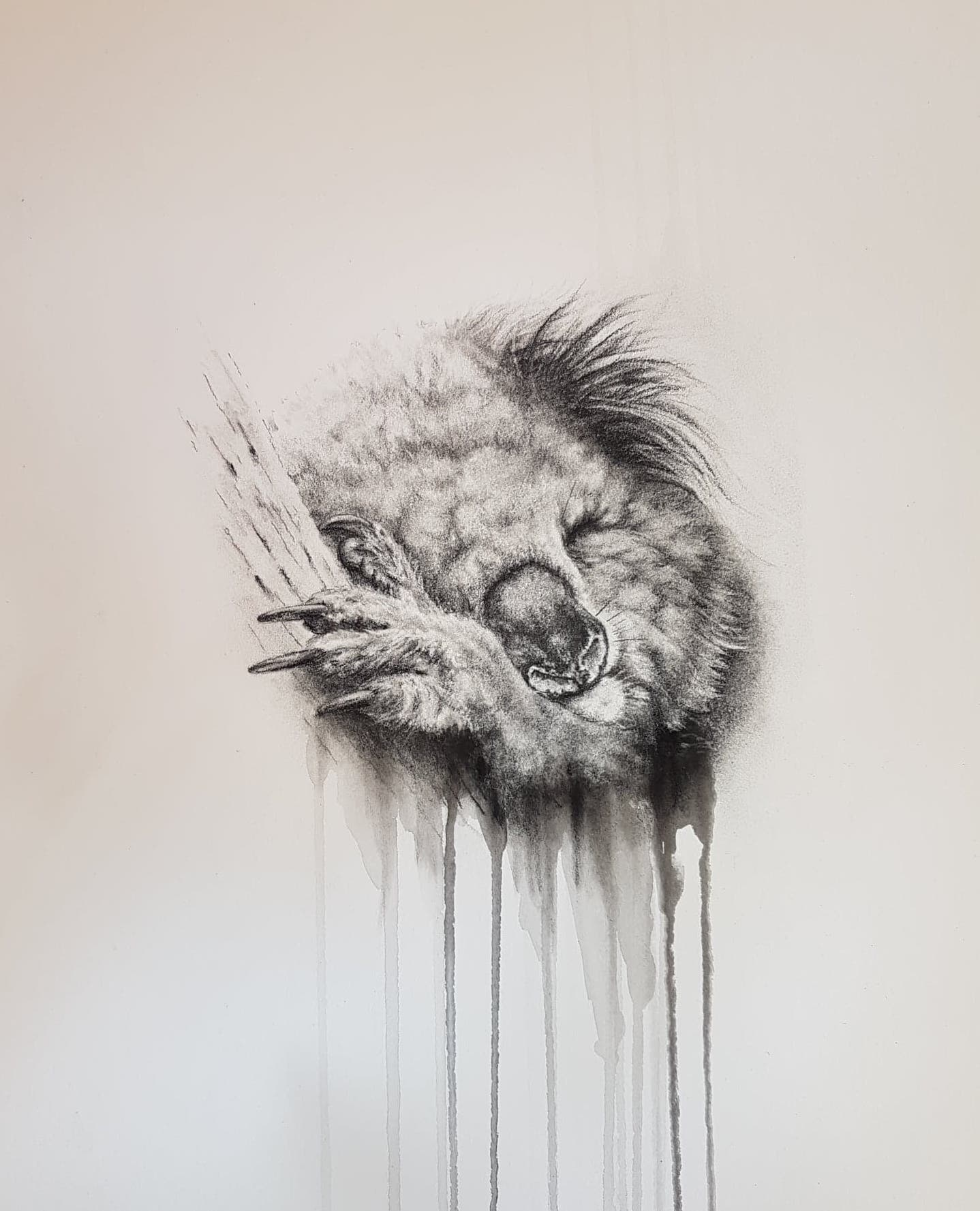 Living with Koalas artist Sharon Moroney
