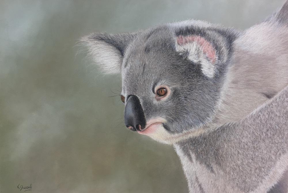 Living with Koalas artist - Kerri Dixon