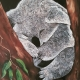 Living with Koalas artist - Sue Borg
