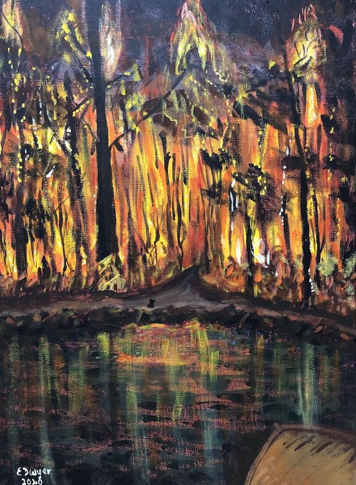 Living with Koalas artist - Evelyn Dwyer