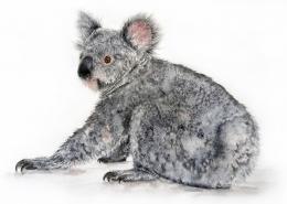 Living with Koalas artist Tracy Hughes