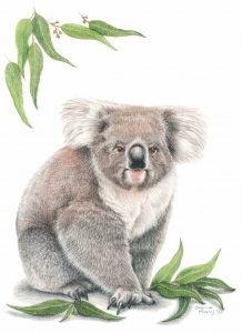 Living with Koalas artist Joanne Pearcy
