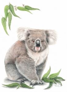 Living with Koalas artist Joanne Pearcy