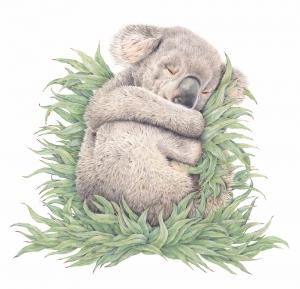 Living wiht Koalas artist Sarah Hardy (Popcorn Blue_