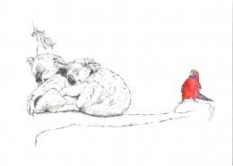 Living with Koalas artsit Juile Lawson
