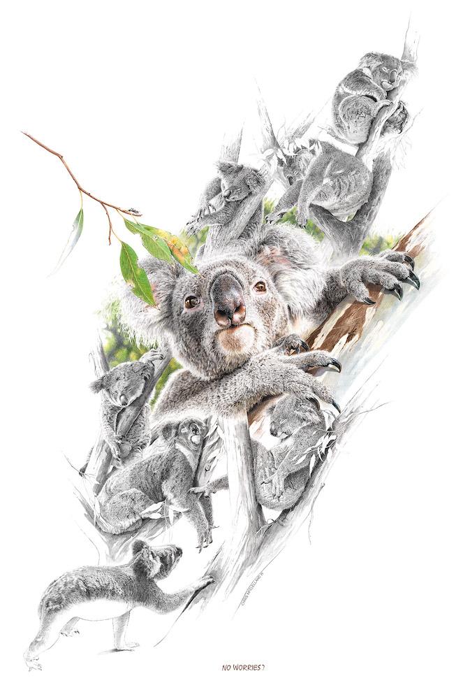 Living with Koalas artist Chris McLelland