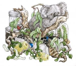 Livingwith Koalas artist