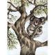 Living wiht Koalas strait Shannon Dwyer