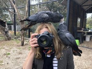 Living with koalas artsit - photgrapher Angela Robertson-Buchanan