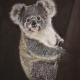 Living with Koalas artist - Rose Watson