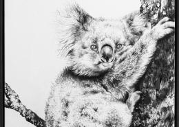 Living with Koalas artist Jaimee PAUL ' Countless'