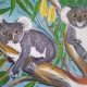 Living with Koalas artist - Glenda McLACHLAN