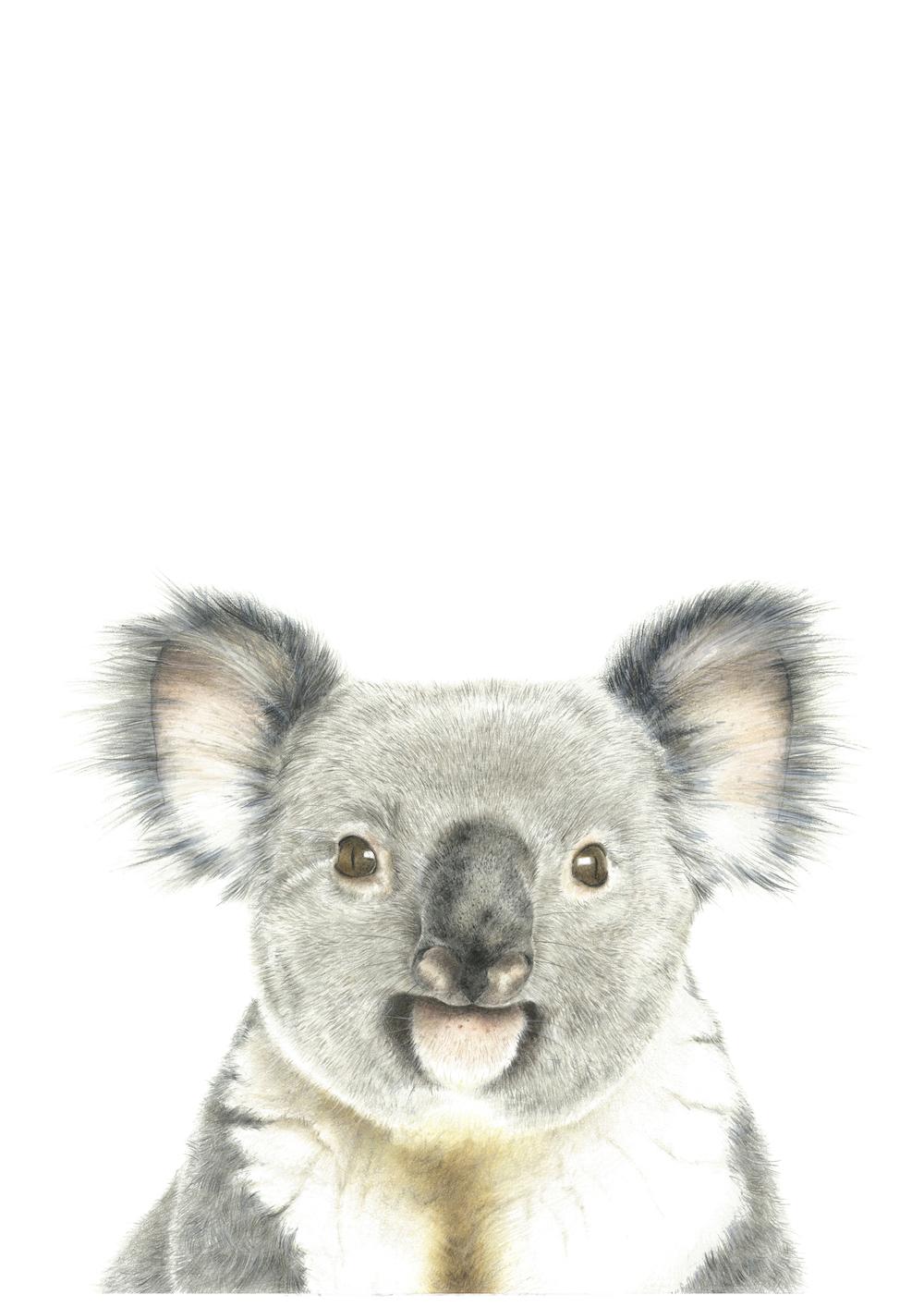 100 artworks for a koala - nayana ILIFFE