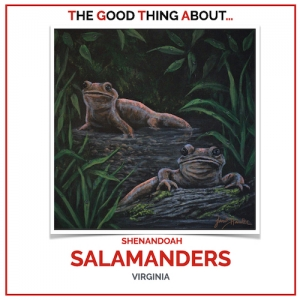 50 USA Virginia - Shenandoah SALAMANDERS